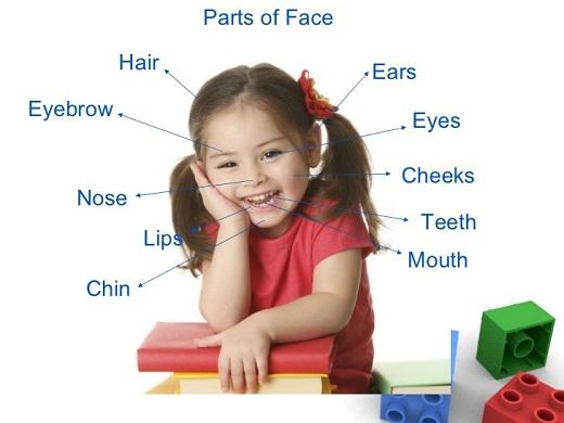 Части лица на английском