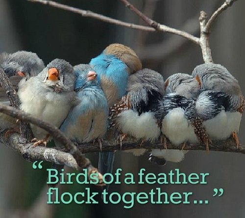 Birds of a feather flock together...